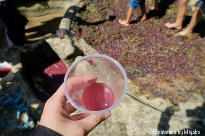 スペインのリオハで体験した踏みたてのぶどう果汁