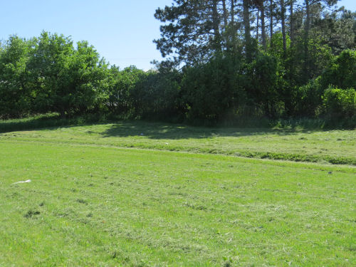 mowed lawn