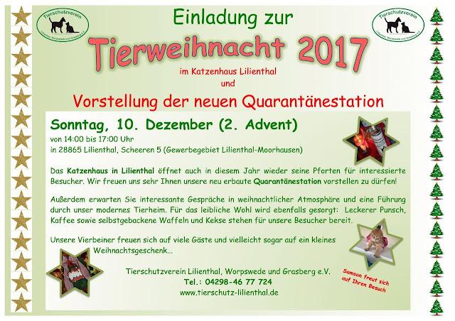 http://www.tierschutz-lilienthal.de/vermittlung/katzen/
