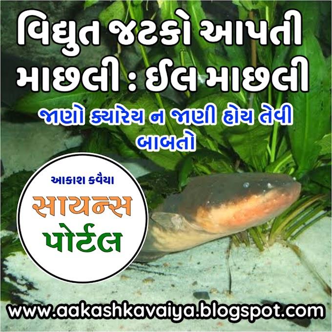 Electric eel | વિદ્યુત શોક આપતી માછલી : ઈલ