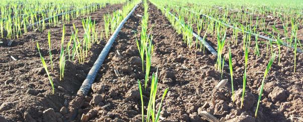 Drip irrigation advantages