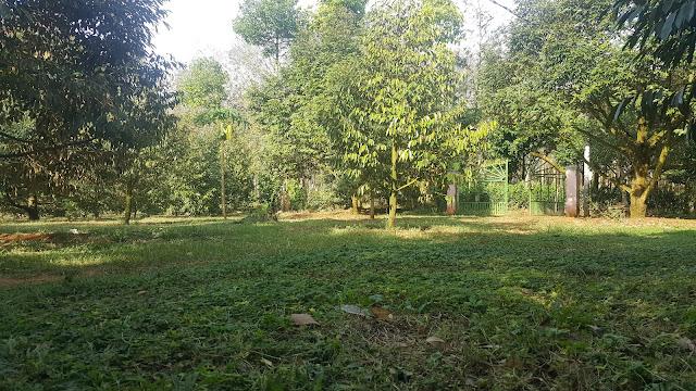 Thảm cỏ xanh trước nhà