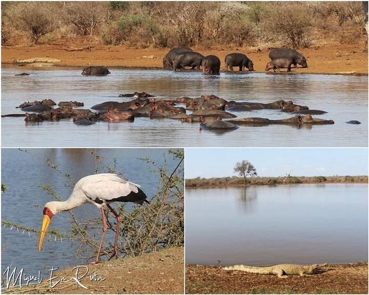 Fauna-Sunset-Dam-Kruger