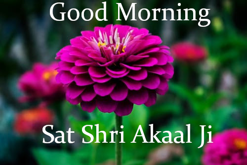 Sat Shri Akaal Ji  Good Morning.