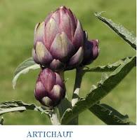 Remède plante l'artichaut pour la santé.