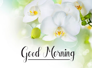 Good Morning Royal Images Download for Whatsapp Facebook56