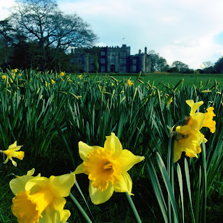 Daffodils in bloom at Birr Castle