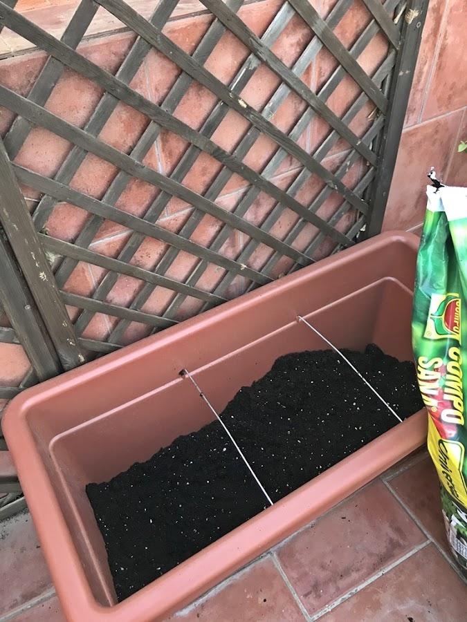 Preparar para trasplantar flores
