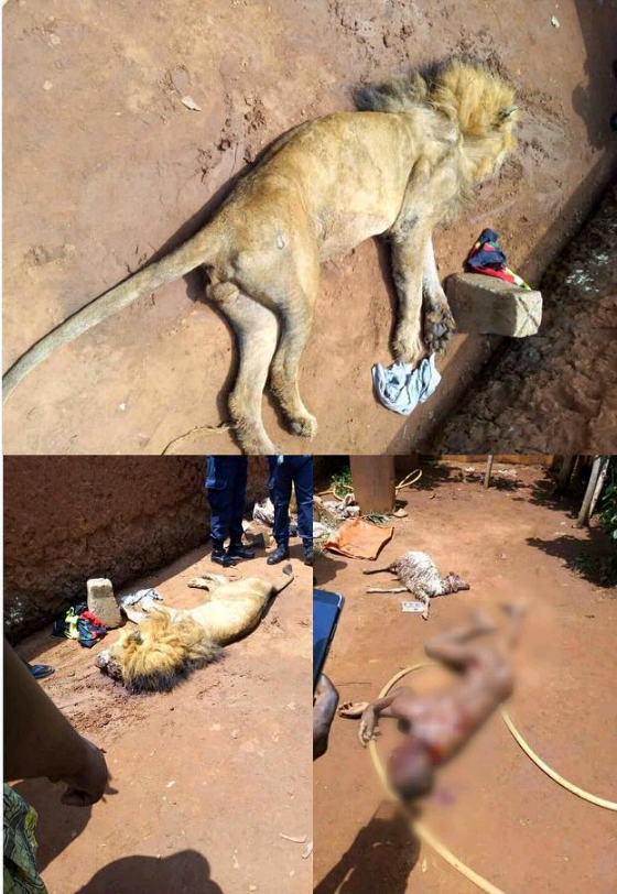 Lion Kills A 14 Years Old Schoolboy In Benin's Private Zoo. Screenshot_20180316-154802