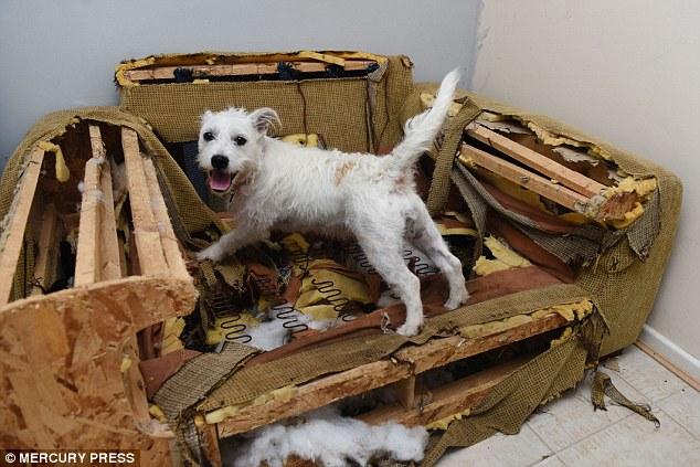 Dog Destroys Bed When Left Alone