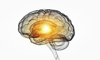 IQ and brain