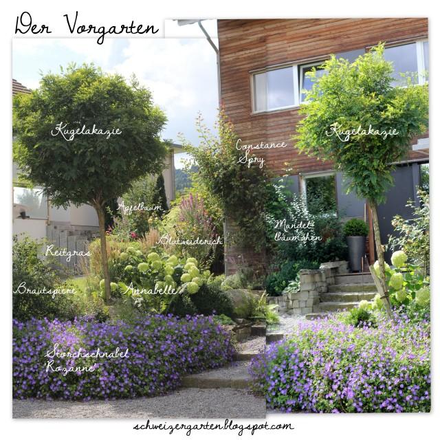 Vorgarten+Gestaltung+Rozanne+Annabelle+Hortensien+Kugelakazie+ - vorgarten moderne gestaltung