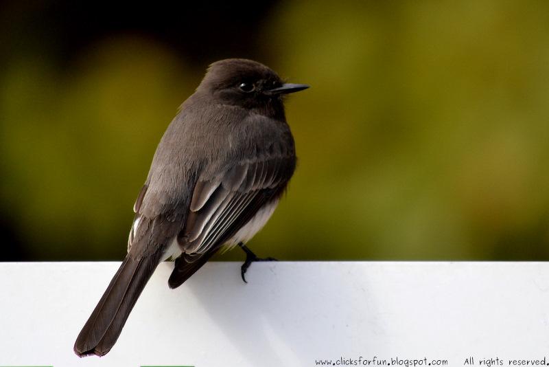Fun Clicks: Birdwatching Vol. 2
