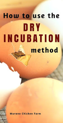 Dry incubation method for chicken eggs