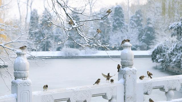 Bắc Kinh được mệnh danh là bức tranh tứ bình thu hút du khách từ khắp nơi. Mùa đông đến, vùng đất thủ đô Trung Quốc khoác lên lớp áo bông trắng xóa, tuyết phủ đầy trên cây cối, phố phường. Cứ mỗi đợt tuyết rơi, Bắc Kinh lại nhộn nhịp với loạt hoạt động như cùng nhau làm người tuyết, tham gia các trận đấu bóng tuyết hay check-in các điểm du lịch nổi tiếng...