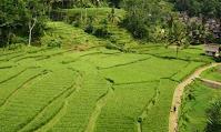 Pengertian Lahan Pertanian, Kriteria, dan Klasifikasinya