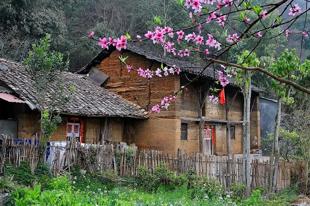 Magnificient Ha Giang - Best season for visiting 1