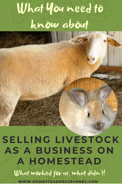 Selling Livestock as a business on a homestead. What worked for us and what didn't! #homestead #smallfarm #sellinglivestock