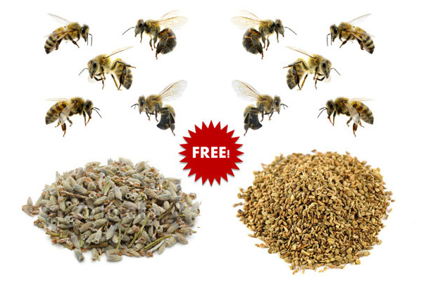 Free Packet of Flower Seeds, Bees Flying, Lavender Seeds, Thyme Seeds