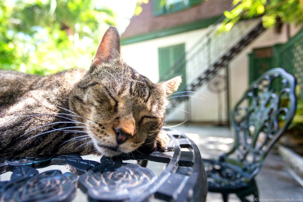 cats ernest hemingway home and museum key west florida