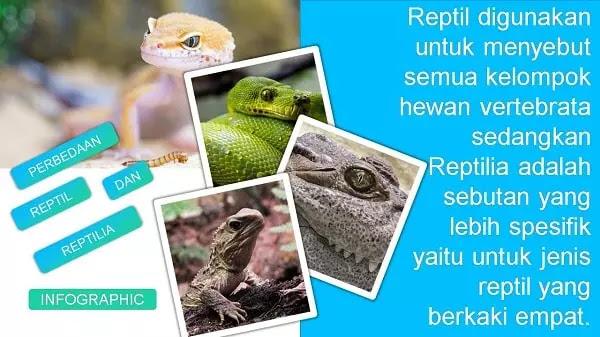 apa perbedaan reptil dengan reptilia