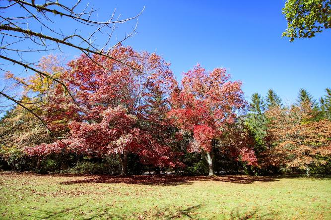 Breenhold Gardens Mount Wilson Autumn