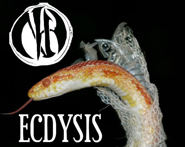 Ennaytch - Ecdysis