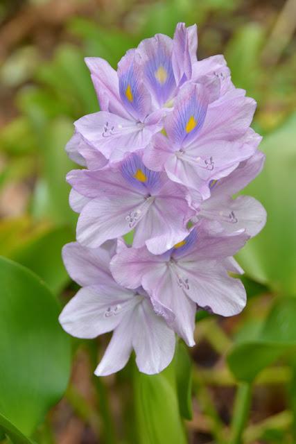 Anadale Falls Grenada flowers