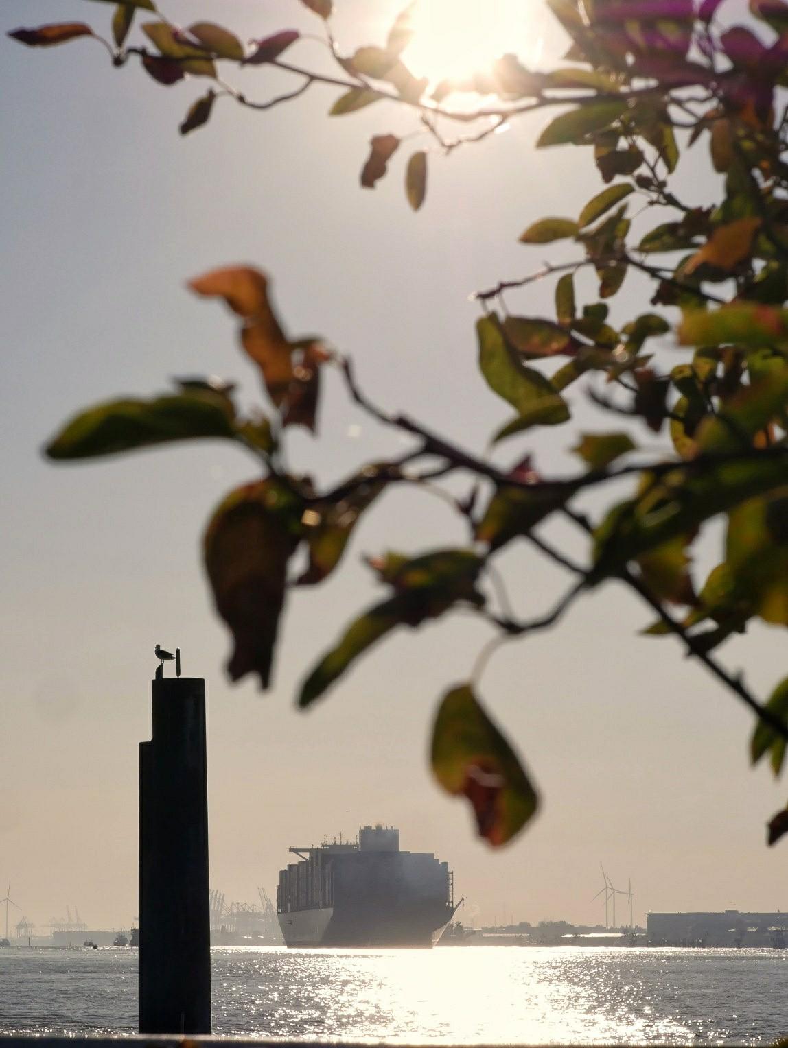 Elbe morgenstimmung