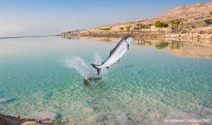 Peces en el Mar Muerto