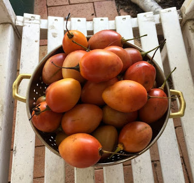Tamarillo - how to cook and grow them