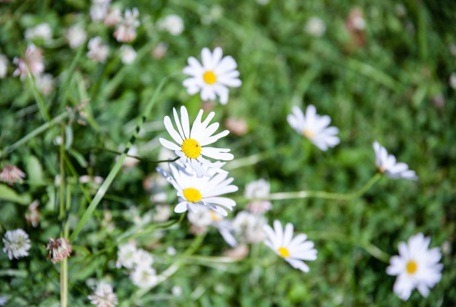 kukka kesä suomi
