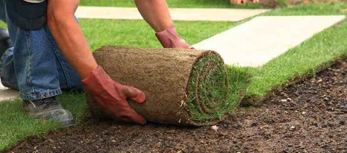 An Exclusive Guide for Dog Owners to Maintain Their Sod Grass