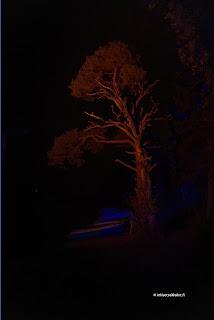 Puu koskenmäellä