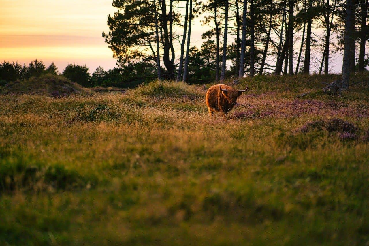 كوكتيل صور حيوانات خلفيات حيوانات جميلة