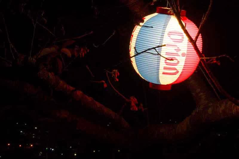 Orion Beer lantern at night, Nago Mountain, Cherry Blossoms