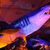 «Δεινόσαυροι και τέρατα των θαλασσών» στη θάλασσα του Ελληνικού Κόσμου