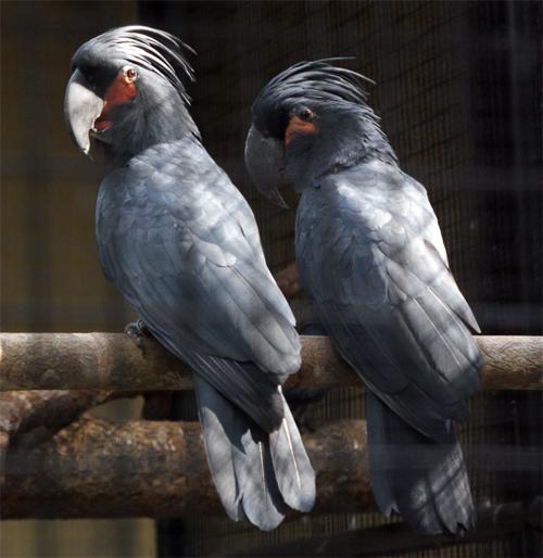 burung berwarna indah, burung paling cantik sedunia