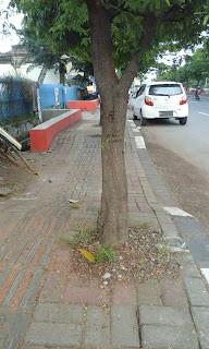 fungsi pohon menjadi hilang