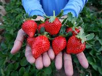 Menu Makanan Diet Sehat Dari Buah Strawberry