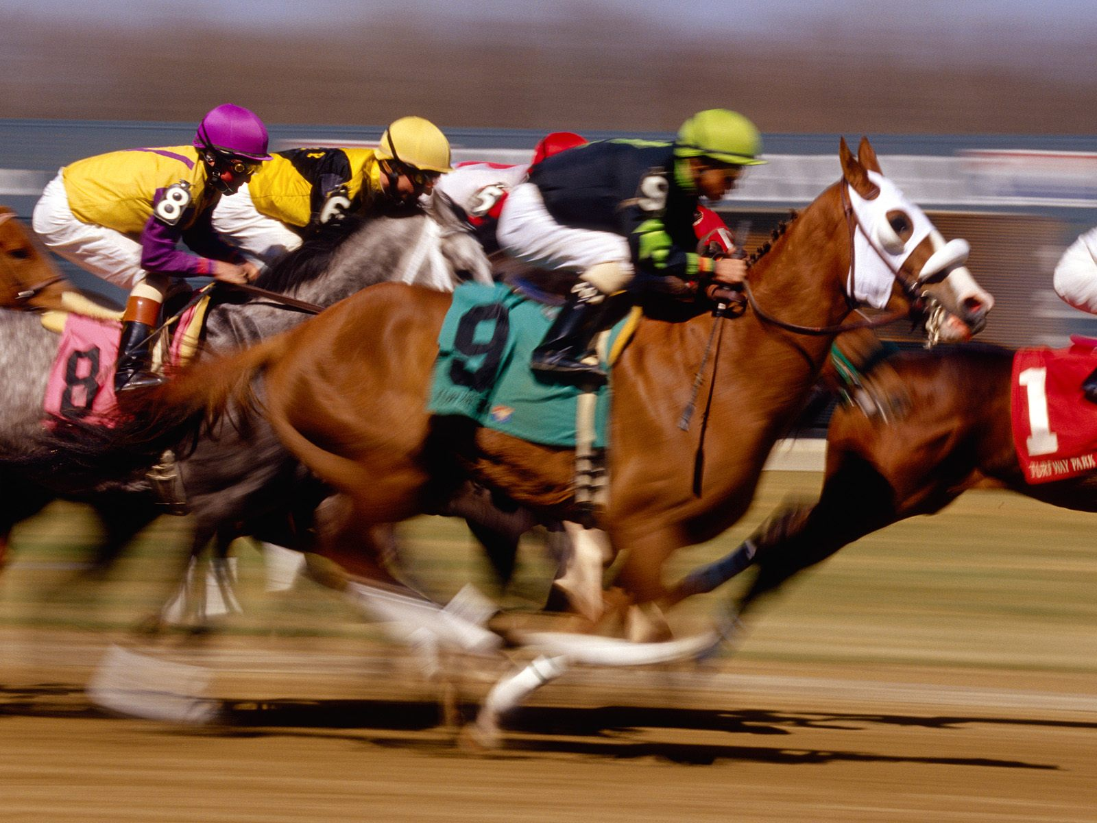 Horse Racing Blogs