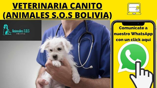 Veterinaria La Paz Bolivia