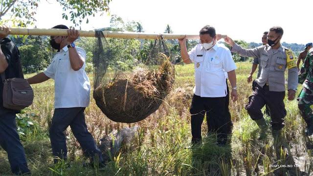 Terapkan Program IP3K, Wabup Subandrio Meninjau Potensi Pertanian di Desa Semabi