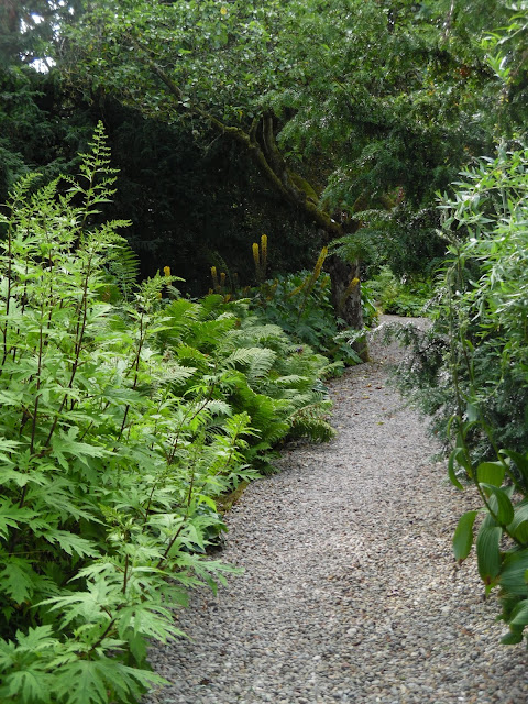 ogród cienisty