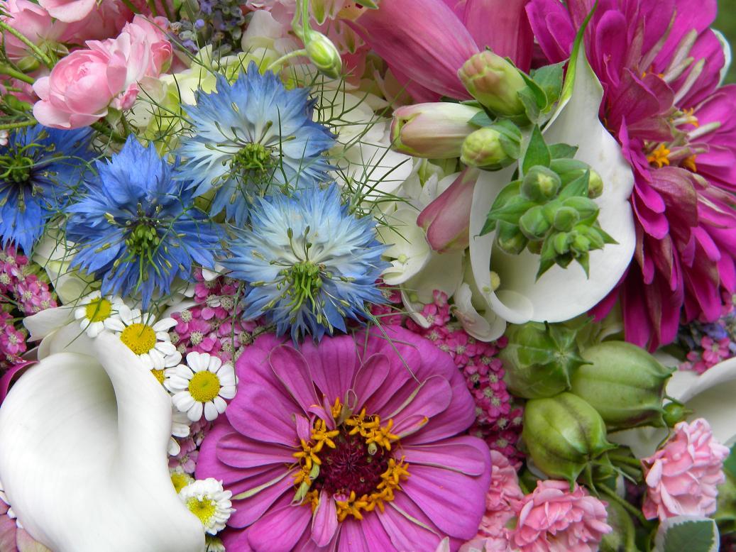 Wedding Flowers From Springwell: Summer Bouquet- Zinnias