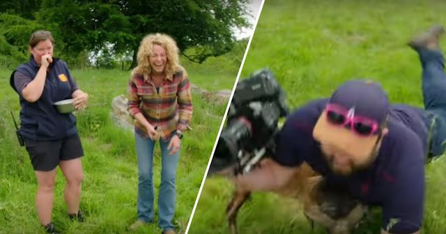 कैमरा देख गुस्सायी भेड़, किया कैमरामैन पर हमला और वायरल हुआ वीडियो
