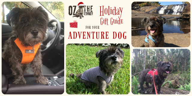 Holiday Gift Guide of Gear for an Adventure Dog