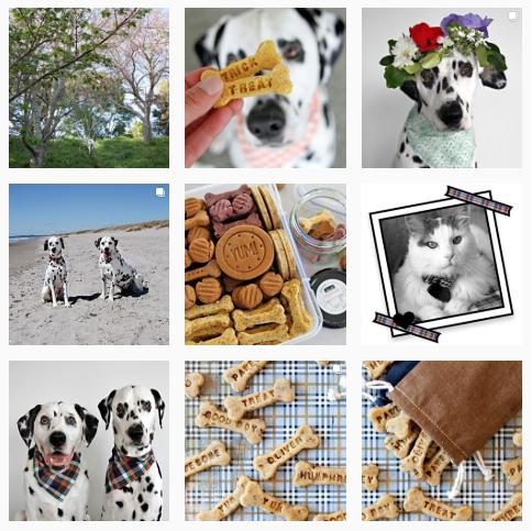 Screenshot of Dalmatian DIY's Instagram