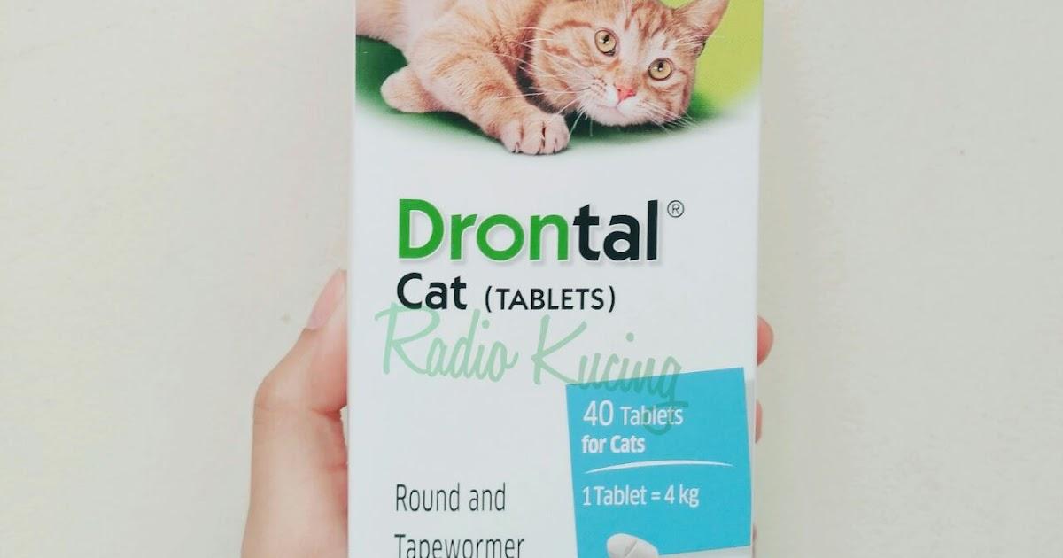 Gambar Kucing Hamil godean.web.id