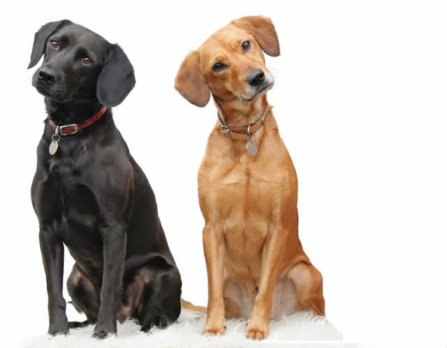 Nomes Bonitos para Cães